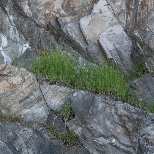 Stein_und_Grass